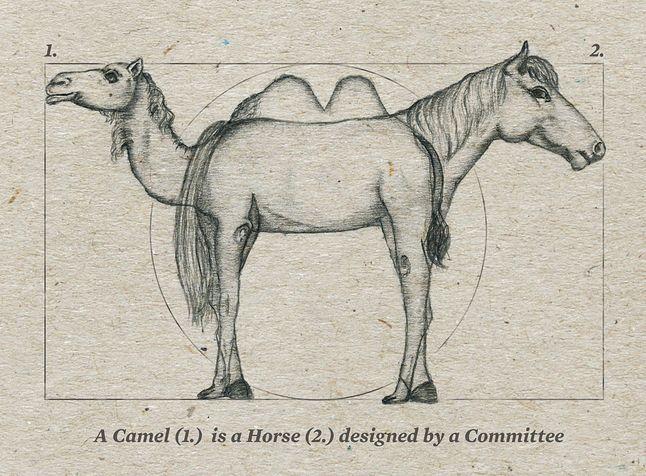 Wielbłąd to koń zaprojektowany przez komitet (fot. modern8)