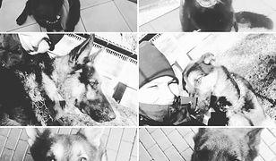 Stołeczni policjanci opublikowali zdjęcia psów