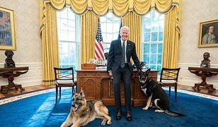 Psy prezydenta USA odesłane. Zwierzaki Joe Bidena się nie popisały