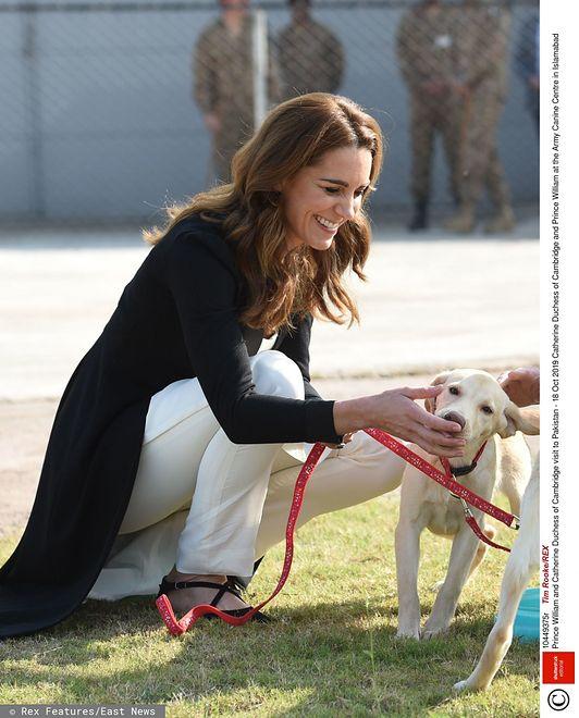 Miłość do psów