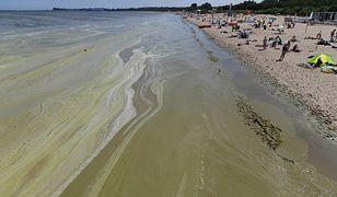 Sześć kąpielisk przy Bałtyku zostało zamkniętych z powodu sinic