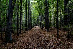 Las to stan umysłu. Naukowcy cały czas odkrywają, jaki potencjał kryje się w przyrodzie