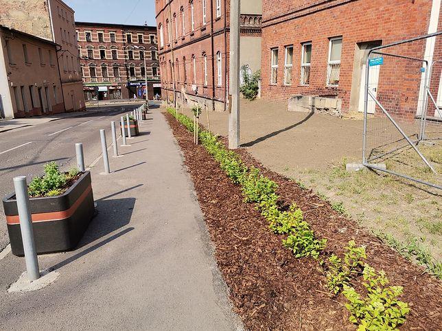 Katowice. Dzięki pomysłom mieszkańców katowickie ulice są coraz bardziej zielone.