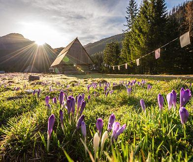 Dolina Chochołowska. Jedno z najpiękniejszych miejsc w Tatrach