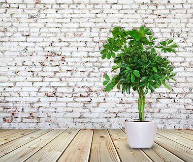 Rośliny, które oczyszczają powietrze w pomieszczeniu