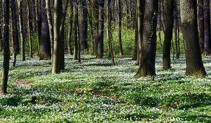 Co z prywatyzacją lasów? Nieoczekiwany zwrot ws. kontrowersyjnej ustawy