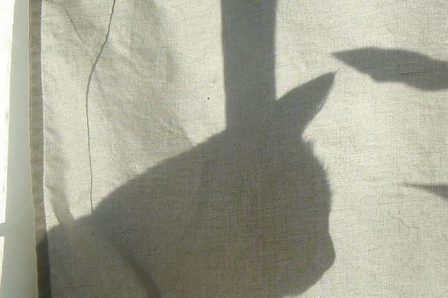 Do banku w Zakopanem włamał się... kot