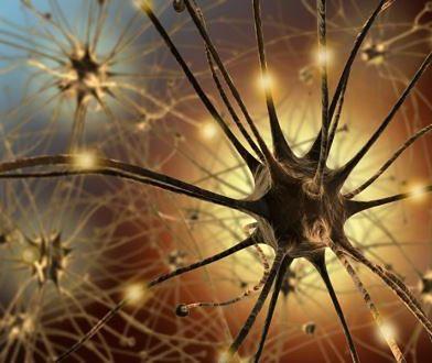 Zadbaj o swój mózg i pomóż nauce
