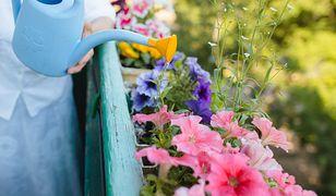 W kwiatach