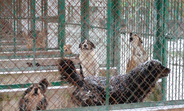 Każdego roku gminy muszą uchwalać program opieki nad zwierzętami bezdomnymi oraz zapobiegania bezdomności zwierząt na ich terenie