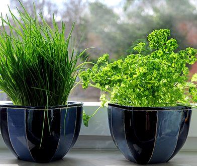 Rośliny doniczkowe są skutecznym sposobem na oczyszczanie powietrza w mieszkaniu.
