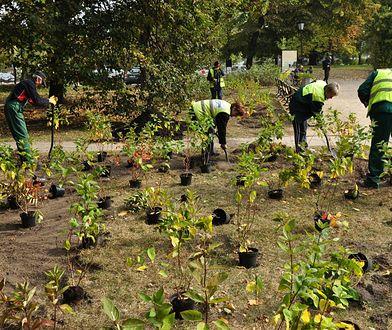 Tysiące krzewów dla Warszawy