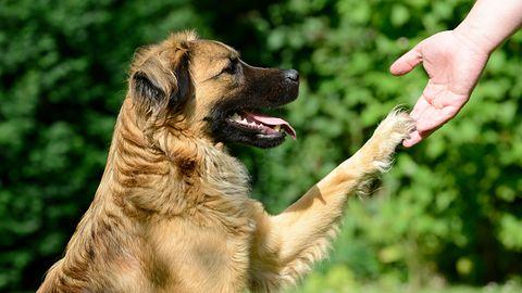 Podaj łapę – przegląd aplikacji dla właścicieli psów