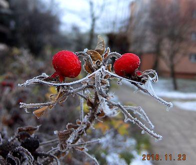 """Zima walczy z jesienią. """"Śnieg i szadź"""" - czekamy na Wasze zdjęcia"""