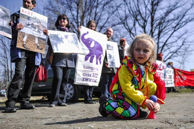 Jeden z protestów przeciwko występowaniu zwierząt w cyrku.
