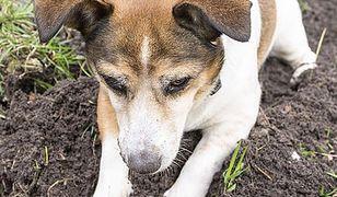 Psy atakowane na Woli