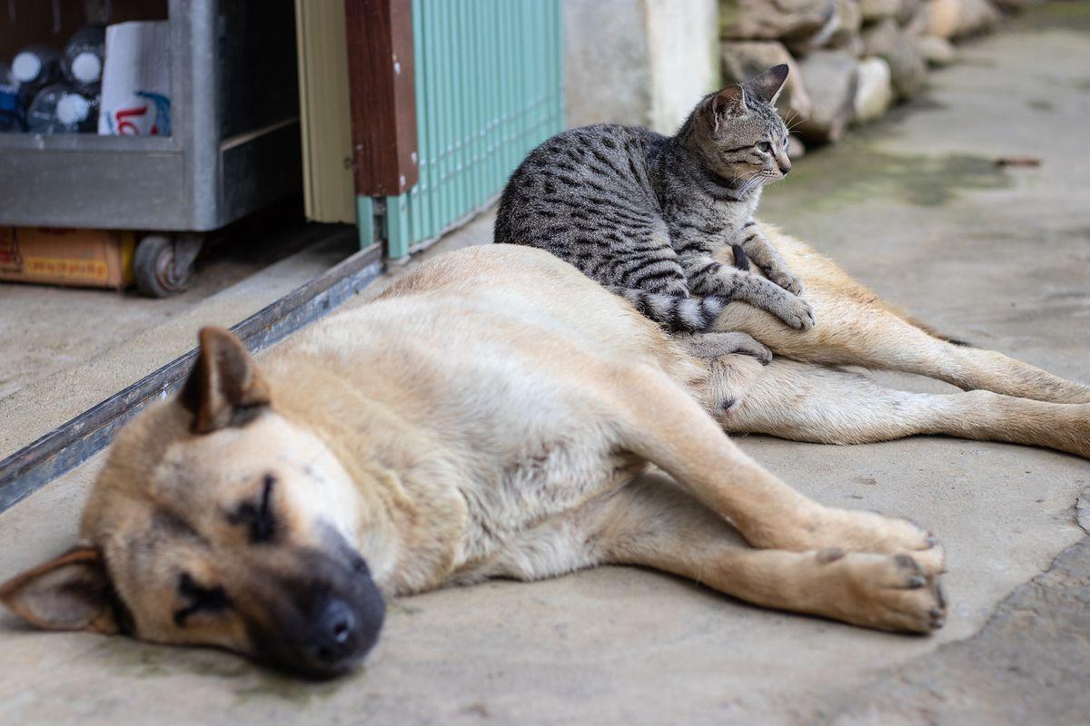 Warszawa zachęca do czipowania psów i kotów