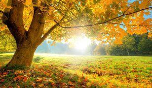 Czeka nas złota polska jesień? A może wrócą jednak upały?
