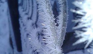Na Białorusi zima wyrządziła szkody