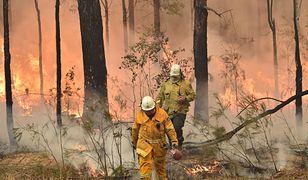 Dramatyczne nagranie z Australii. Dzień zmienia się w noc, strażacy uciekają