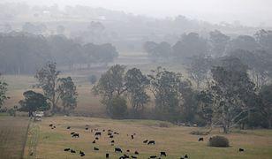 Australia walczy z pożarami. Pojawił się deszcz i nowe zagrożenie