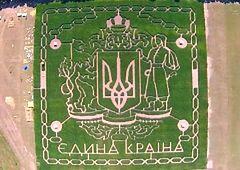 Kijów - labirynt na polu kukurydzy