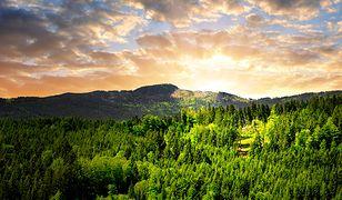 Szumawa - zielony dach Europy