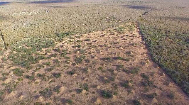 Kopce są widoczne nawet ze zdjęć satelitarnych