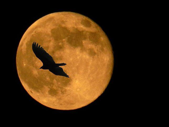Super Blue Blood Moon - w Polsce nie ma co liczyć na takie widoki