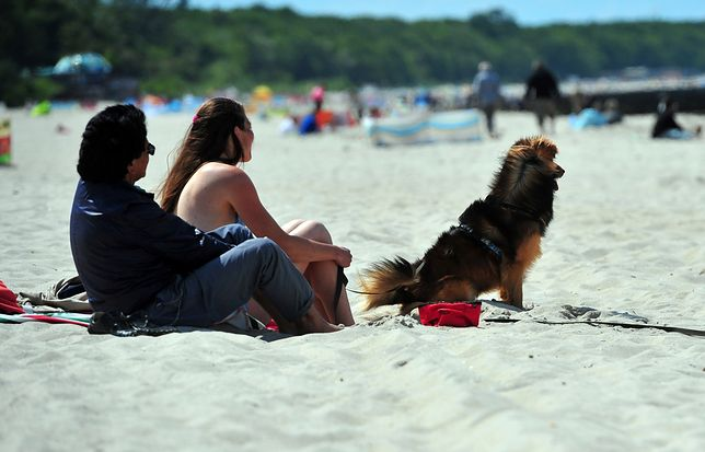 Gdzie z psem na wakacje?