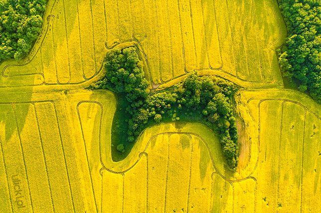 Niesamowite zdjęcie wykonano na Dolnym Śląsku