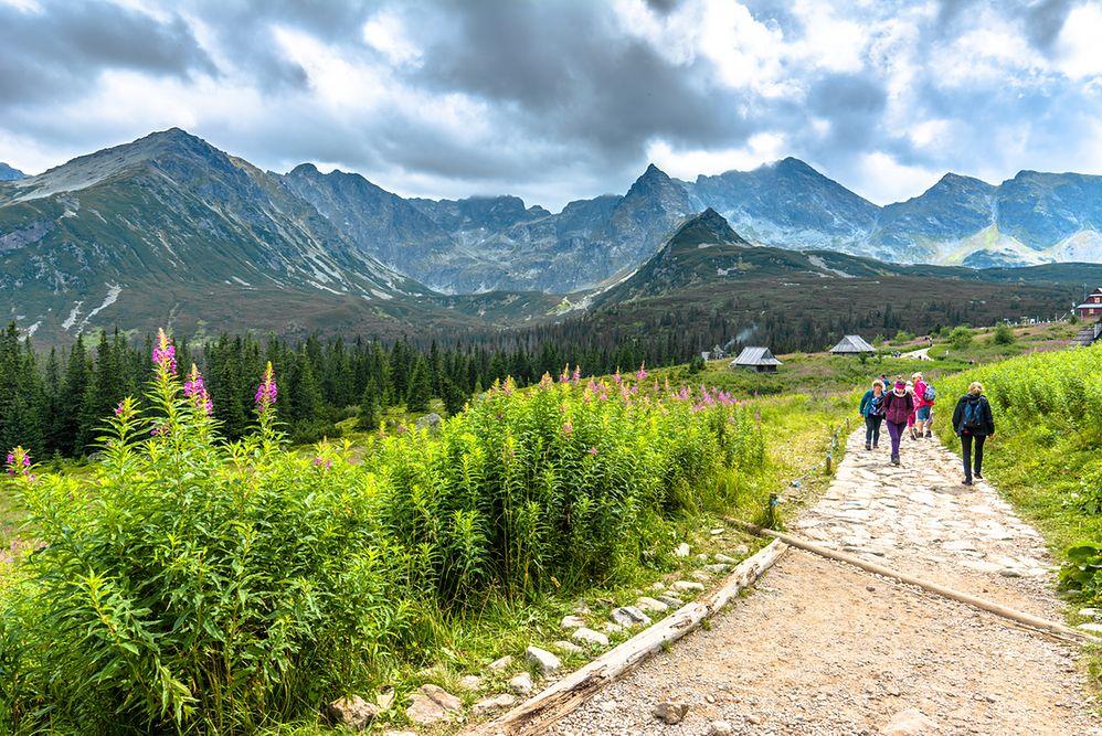 Zakaz chodzenia po Tatrach nocą. Chroni zwierzęta i... turystów