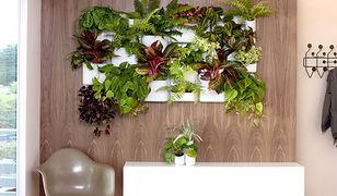 Zrób sobie ogród w salonie. Efektowne sposoby eksponowania zieleni na ścianach