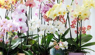 Najmodniejsze rośliny doniczkowe. Te kwiaty długo nie wyjdą z mody
