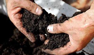 Do użyźniania ziemi w ogrodzie warto wykorzystać fusy z herbaty lub kawy