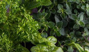 Zioła i przyprawy, które pomogą pokonać nieświeży oddech