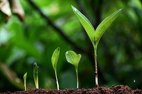 Składniki roślinne, które wpływają na obniżenie poziomu cholesterolu