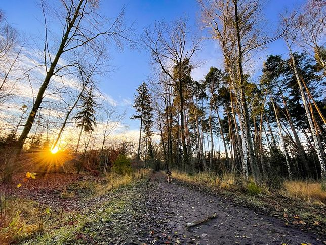 Pogoda. Wrocław. 22 lutego 2021 - wiosna w natarciu. Temperatura zbliży się do 20 st. C