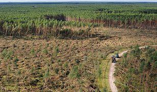 Nawałnica na Pomorzu. Żywioł zniszczył tysiące hektarów lasów. Tamtej nocy zginęli też ludzie