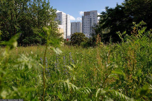 Zalecenie, by nie kosić trawników, u niektórych wywołuje frustrację