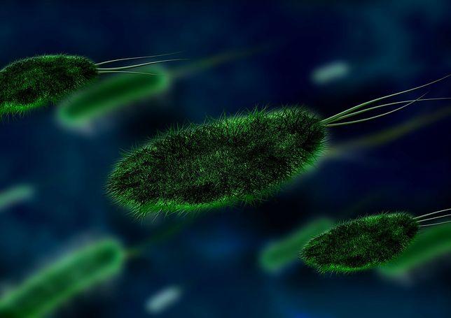 Zdjęcie ilustracyjne. Naukowcy odkryli nietypowe wirusy