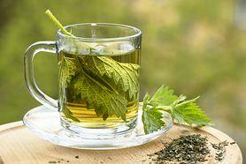 Pokrzywa - właściwości, działanie, zastosowanie. Czy picie herbaty z pokrzywy jest zdrowe?