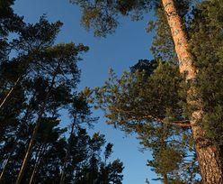 Pierwsze nadleśnictwo w Polsce wprowadziło zakaz wchodzenia do lasu