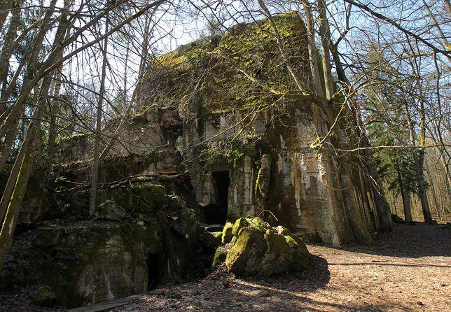 Lasy Państwowe zarabiają miliony na turystach. Tłumy chcą zwiedzać kwatery, w których mieszkał Adolf Hitler.
