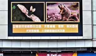 Koronawirus. Jego źródło to mokry targ w Wuhan? Są inne tropy