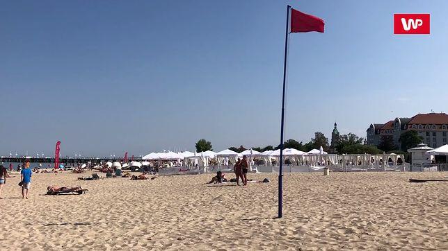 """Sinice """"podbijają"""" Zatokę Gdańską. Czerwone flagi rujnują turystom wakacje"""