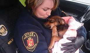 Strażnicy miejscy na pomoc zwierzętom. Eko Patrol obchodzi 15. urodziny!