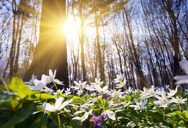 Pogoda na dziś - środa 20 marca. Jaka będzie dziś pogoda w Warszawie, Krakowie, Wrocławiu i Gdańsku?
