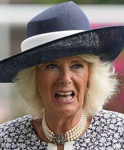 """Księżna Camilla wyrzucona z pałacu. """"Jest wściekła"""""""
