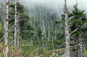 Kwaśne deszcze - w jaki sposób powstają i jak im zapobiegać?